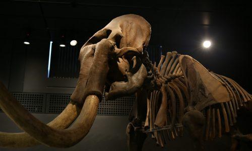 Mexiko-Mammuts: Von Menschen gebaute Mammutfallen wurden in Tultepec(Mexiko) gefunden