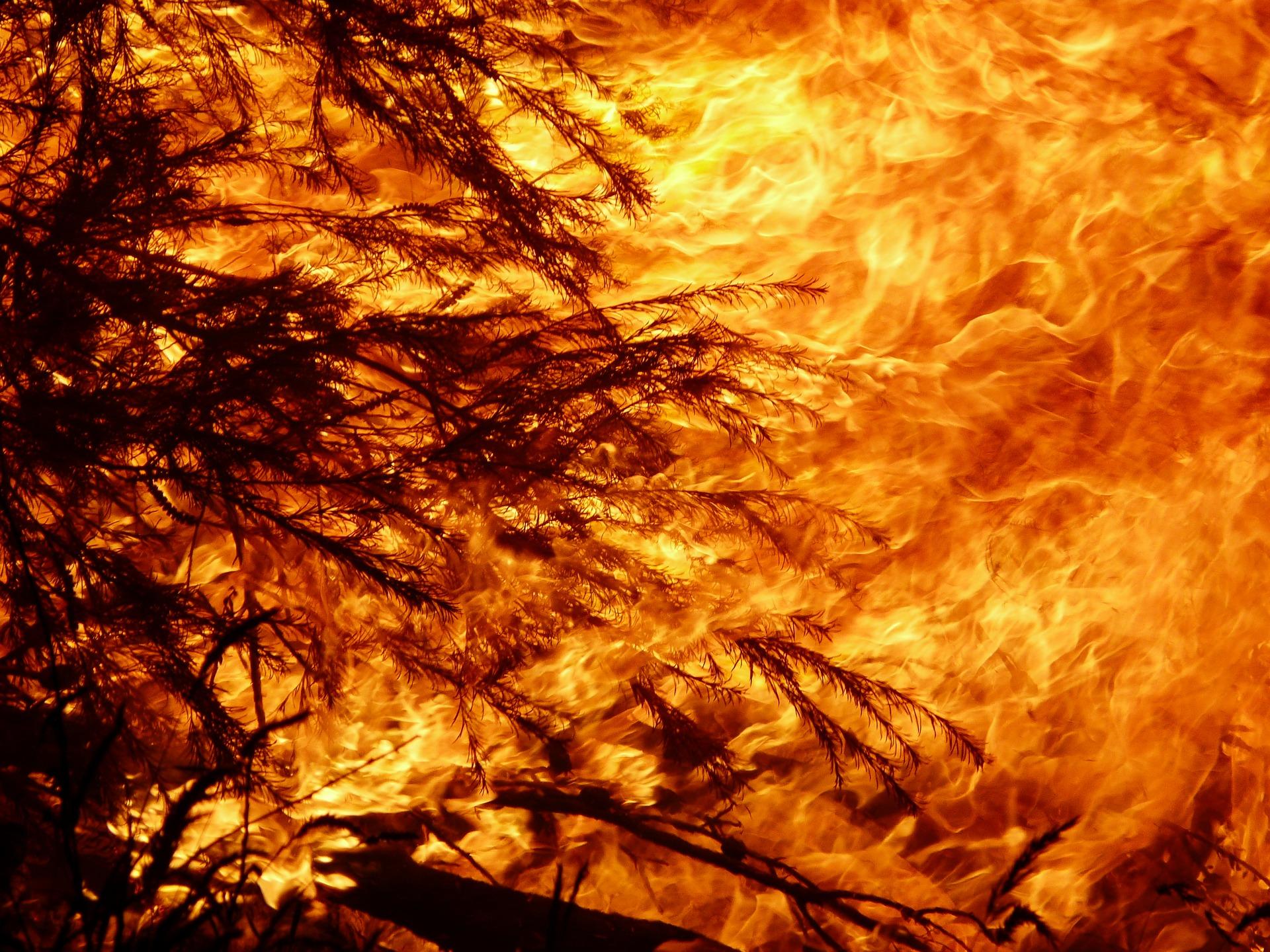 Ist ein Teenager schuld an den Bränden in Australien?
