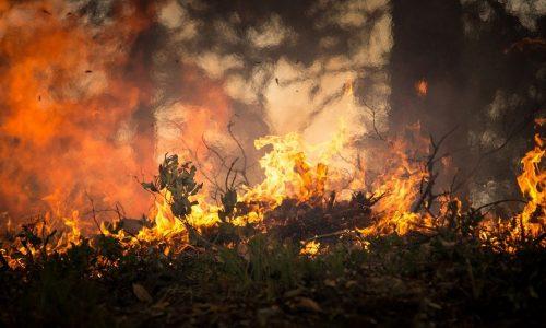 Australien: Ausnahmezustand wegen Waldbränden verhängt