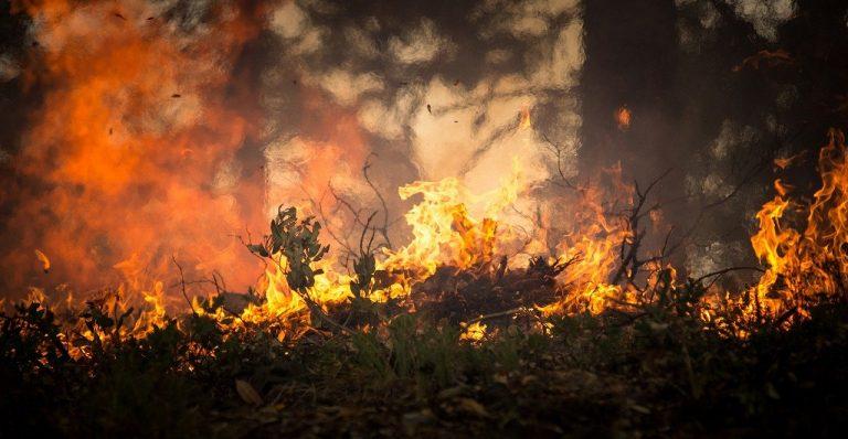 Australien: Hälfte der CO2-Emissionen aus Waldbränden