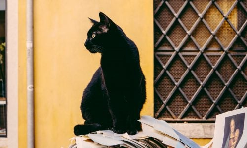 Besitzer fand seine Katze 1900 Kilometer von zuhause entfernt
