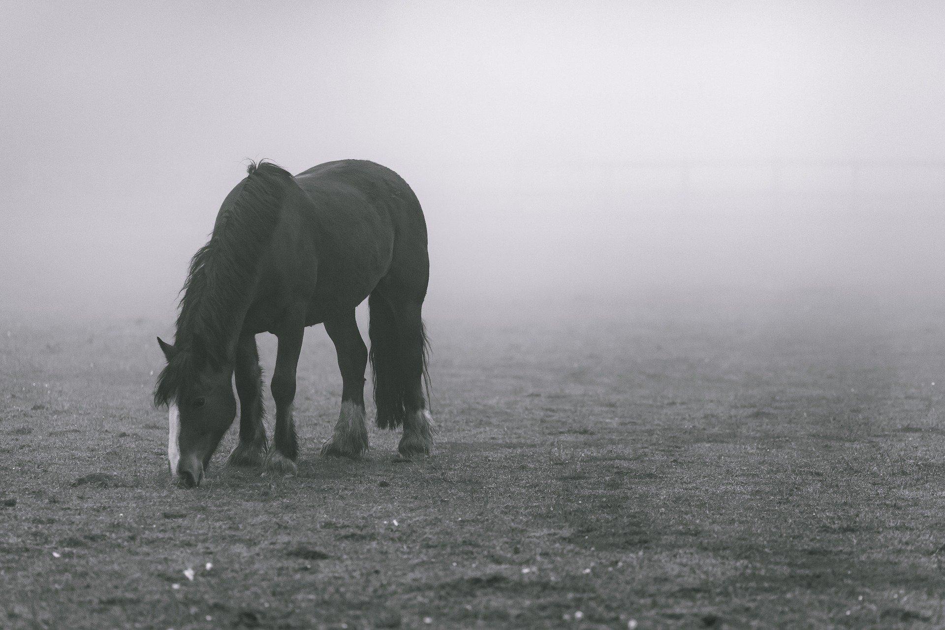 Pferd mit Auto nachgezogen: Paar wegen Tierquälerei angezeigt