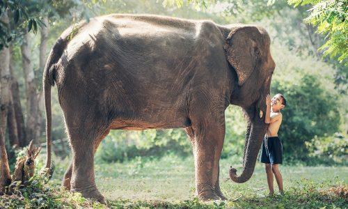 Elefanten plündern Weingut in China und schlafen betrunken ein