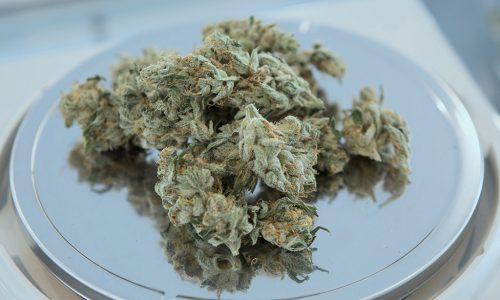 Coronavirus: Cannabis-Nutzung steigt auf Rekordniveau